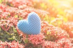 Голубое сердце на зеленом дереве цветка шипа на день влюбленности и ` s валентинки Стоковые Фото