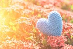 Голубое сердце на зеленом дереве цветка шипа на день влюбленности и ` s валентинки Стоковое Изображение