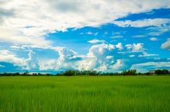 голубое яркое небо Стоковое фото RF