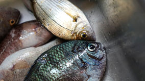 Голубое Fisheye Стоковые Изображения RF