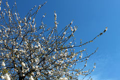Голубое Skye Стоковая Фотография RF