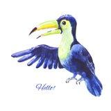 Голубое toucan акварелью Стоковые Фото