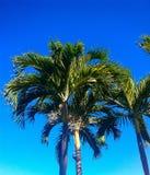 голубой вал неба ладони Стоковые Изображения