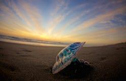 голубой восход солнца Стоковые Изображения