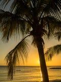 Голубой заход солнца пляжа залива - пальма Стоковые Фотографии RF