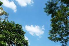 голубой зеленый цвет выходит небо Стоковая Фотография