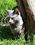 Голубой кот и дерево Стоковая Фотография