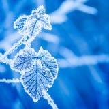 Голубой, морозный, листья, зима Стоковое Изображение