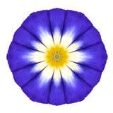 Голубой орнамент цветка мандалы Изолированная картина калейдоскопа Стоковые Фотографии RF