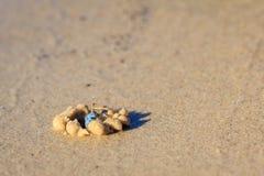 Голубой рак песка Стоковые Изображения RF
