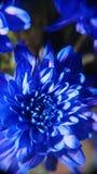Голубой сказ 2 Стоковая Фотография RF