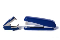 Голубой сшиватель Стоковая Фотография