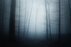 Голубой туман в страшном лесе стоковое фото rf
