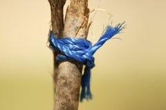 голубой узел Стоковые Изображения RF