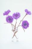 голубой цветок мозоли вектор изображения цветка букета яркий Стоковая Фотография RF