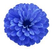 Голубой цветок на белизне изолировал предпосылку с путем клиппирования никакие тени Красивый цветок маргаритки для дизайна closeu Стоковое фото RF