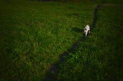 голубой eyed кот Стоковые Изображения RF