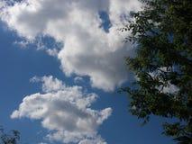 Голубой shy Стоковое фото RF