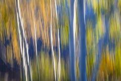 Голубые березы на береге озера Стоковое Изображение RF