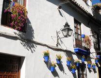 Голубые вазы с цветками Стоковая Фотография