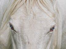 Голубые глазы Стоковая Фотография