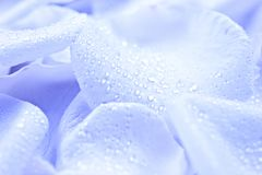 Голубые лепестки цветка Стоковые Изображения RF