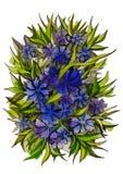 Голубые и фиолетовые cornflowers и листья Стоковые Изображения RF