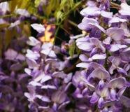Голубые колоколы и пчела Стоковая Фотография
