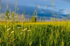 голубые облака на зеленом glade Стоковое Изображение