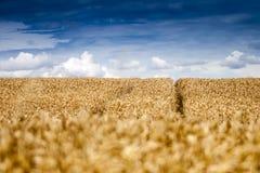 голубые облака field небо стоковая фотография