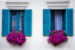 Голубые окна с красотой цветка Стоковые Изображения RF