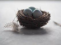 Голубые пасхальные яйца в гнезде Стоковое фото RF
