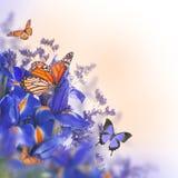 Голубые радужки с желтыми маргаритками Стоковое Фото