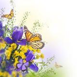 Голубые радужки с желтыми маргаритками Стоковая Фотография