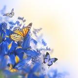 Голубые радужки с желтыми маргаритками Стоковое фото RF