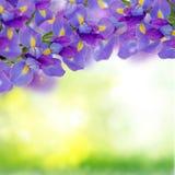 голубые радужки фантазии букета стоковая фотография
