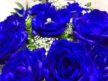 голубые розы стоковое изображение