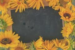голубые солнцецветы стоковое фото rf