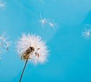 голубые темы весны неба спокойствия утехи свежести одуванчика принципиальных схем полезные Стоковое Фото