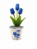 Голубые тюльпаны в белое в горшке стоковые фотографии rf