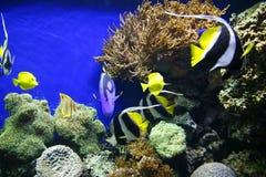 Голубые тяни в воде Стоковое Изображение