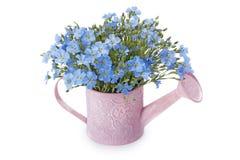 Голубые цветения льна Стоковая Фотография