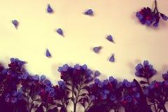 Голубые цветки колоколов Стоковое Изображение RF