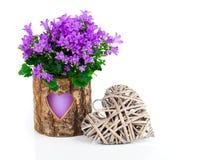 Голубые цветки колокольчика на день валентинки Стоковое Изображение