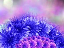 Голубые цветки, на розовым предпосылке запачканной пурпуром Стоковые Фото
