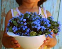 голубые цветки Стоковое Фото