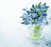 Голубые цветки muscari Стоковые Изображения