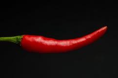 голубые чили пылают горячий излишек красный цвет перца Стоковое Изображение