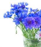 Голубые cornflowers на белизне Стоковые Фото