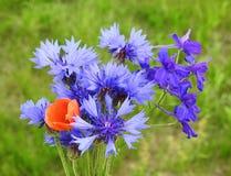 голубые cornflowers Стоковые Фото